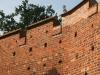 Stadtmauer Wittstock 8