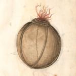 Feuerwerksbuch_Merz-Feuerkugel_00
